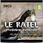 "Caroline Klaus narration documentaire ""Le ratel, prédateur inattendu"" France 5"